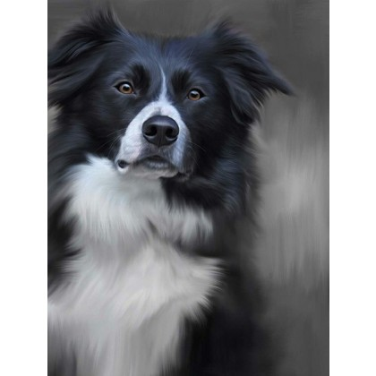 Black and White Collie - 40th Celebration Image