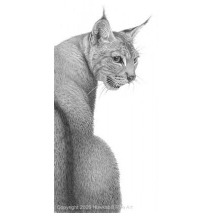 Eurasian Lynx by David Dancey-Wood
