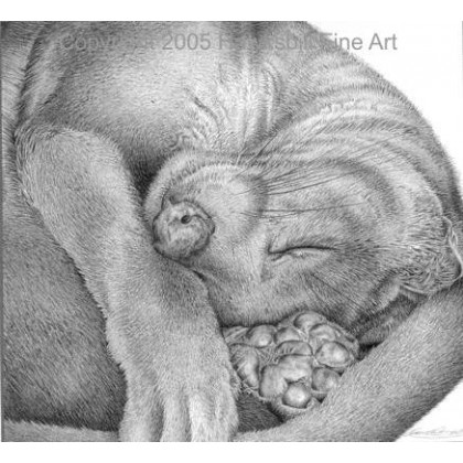 Sleepy Fossa by David Dancey-Wood