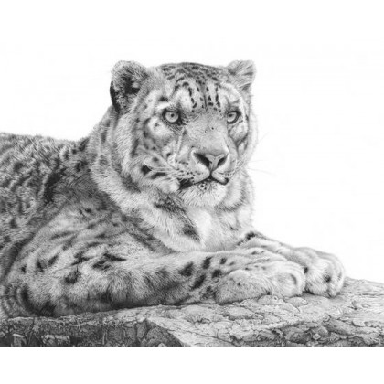 Snow Leopard by David Dancey-Wood