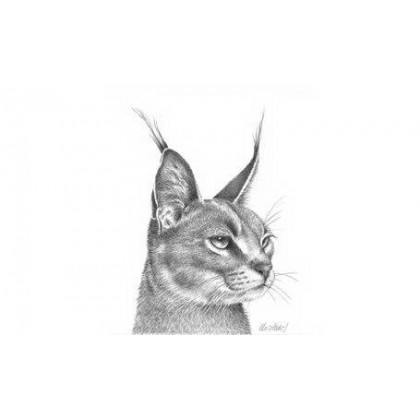 Caracal Study by Peter Hildick