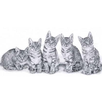 Ocicat Kittens by Sue Miles
