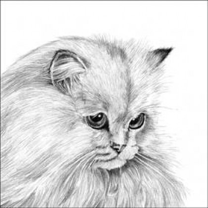 White Persian by Sue Miles