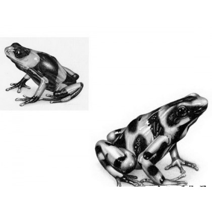 A Pair of Frogs by David Dancey-Wood