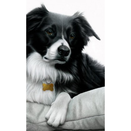 Contrasts - Collie
