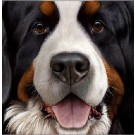 Larger Than Life - Bernese