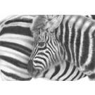 Black & White by David Dancey-Wood