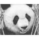 Panda by David Dancey-Wood