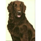 Liver Flatcoat Retriever by Nigel Hemming