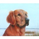 Golden Retriever by Louis Frisino