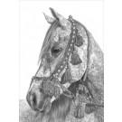 Pure Arabian by Sue Miles