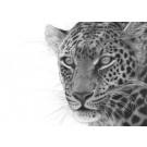 Maasai Leopard by David Dancey-Wood