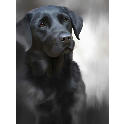 Black Labrador - 40th Celebration Image