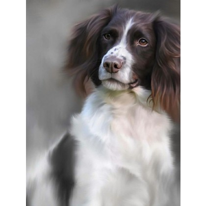 Springer Spaniel - 40th Celebration Image