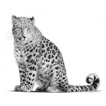 Amur Leopard by David Dancey-Wood