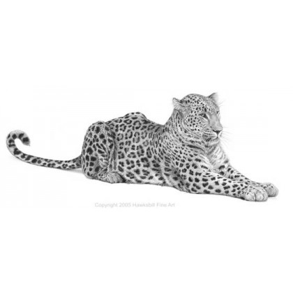 Persian Leopard by David Dancey-Wood