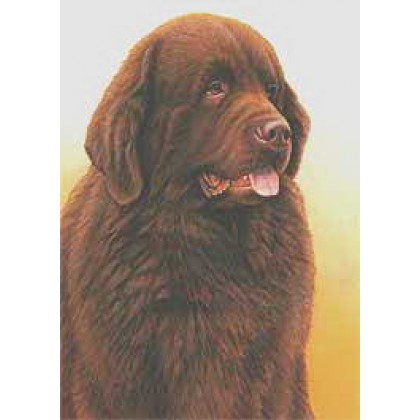 Brown Newfoundland by Nigel Hemming