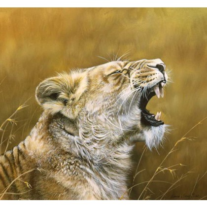 Lioness Yawn by Lyndsey Selley