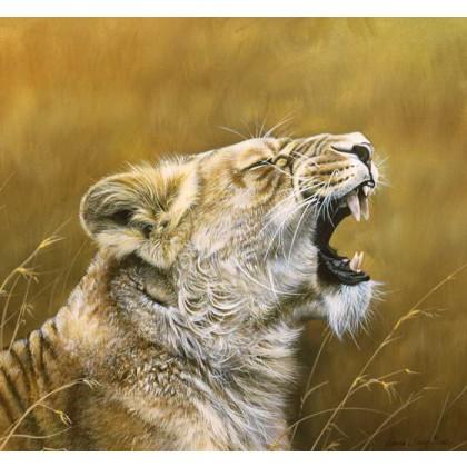Lioness Yawn by Lyndsey Selley