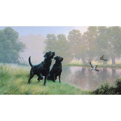 Water Sports, Black Labradors by Nigel Hemming