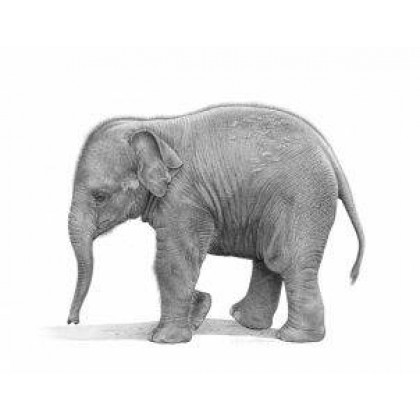 Little Tusker by David Dancey-Wood