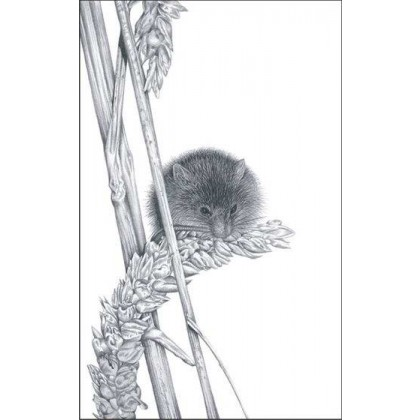 Harvest Mouse by David Dancey-Wood