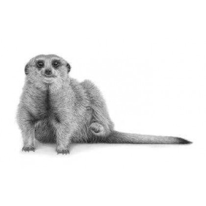 Suricate by David Dancey-Wood