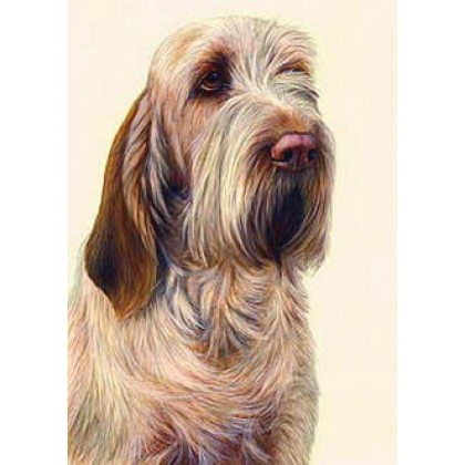 Orange Roan Spinone by Nigel Hemming