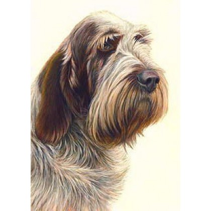 Brown Roan Spinone by Nigel Hemming