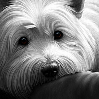 Dog Tired - West Highland Terrier