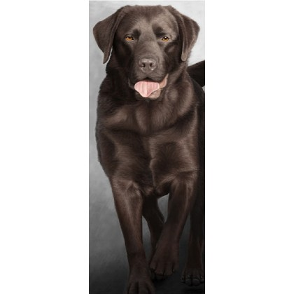 Walk Tall - Chocolate Labrador