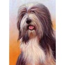 Bearded Collie by Nigel Hemming
