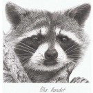 The Bandit by Peter Hildick