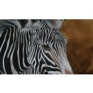 In.....Zebra by Lyndsey Selley