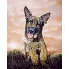 Shepherd's Delight by Paul Doyle